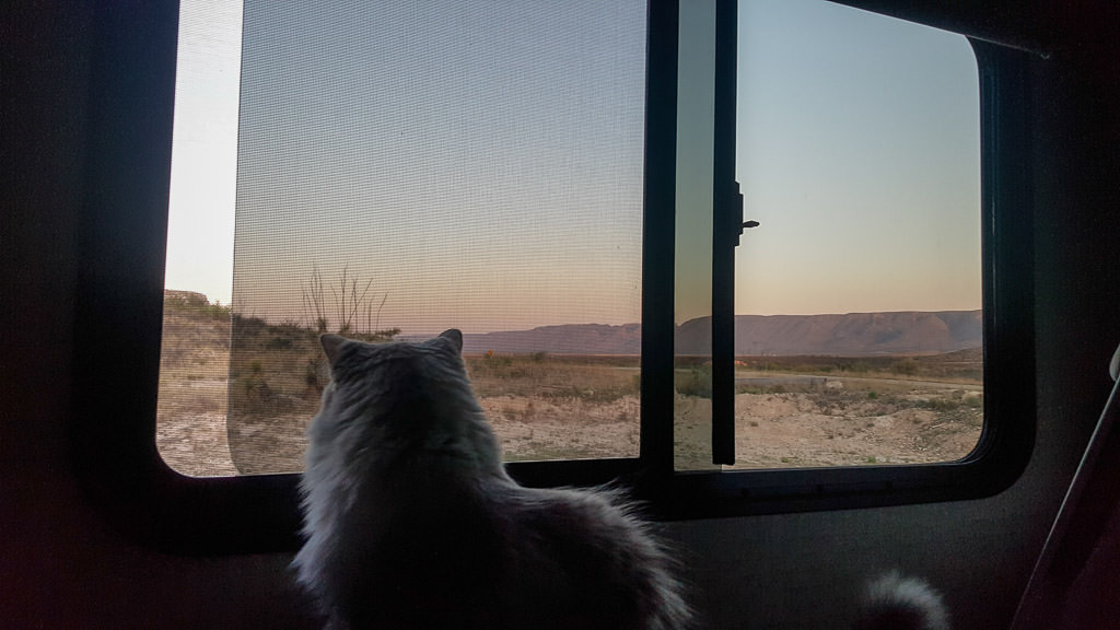 sugar rv cat