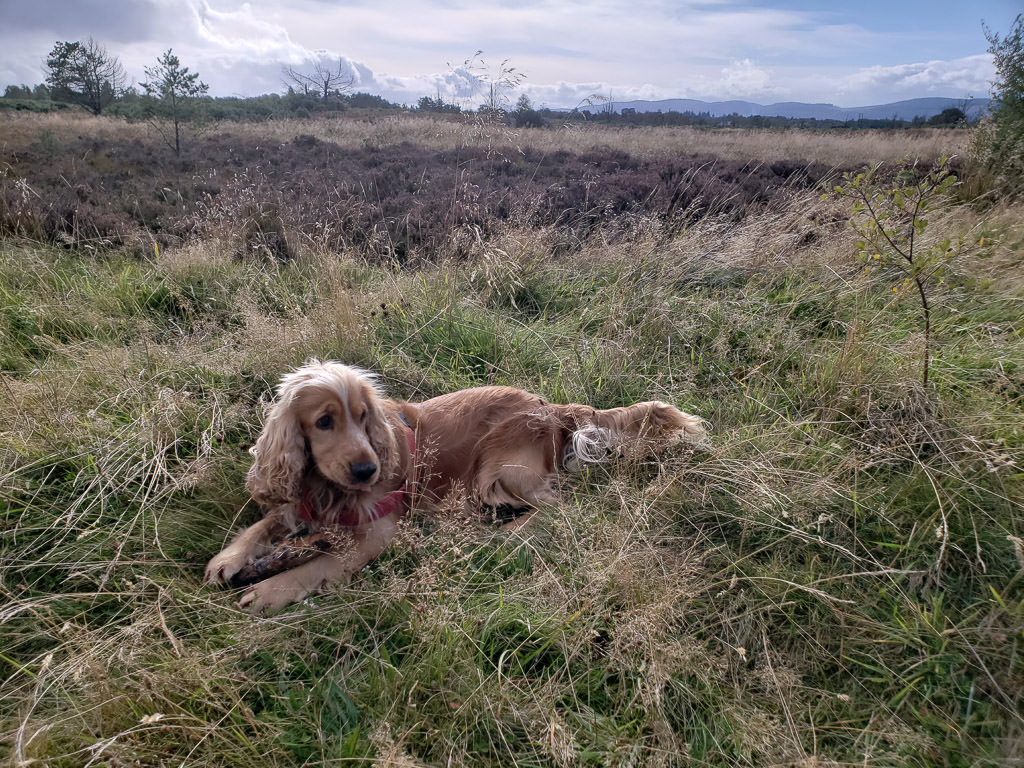 dog in grass on inverness scotland trail